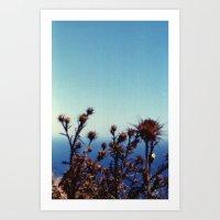 Sun-Bleached Blossom Art Print