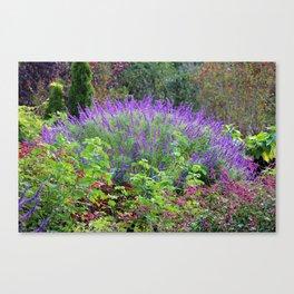 Purple Salvia In The Garden Canvas Print