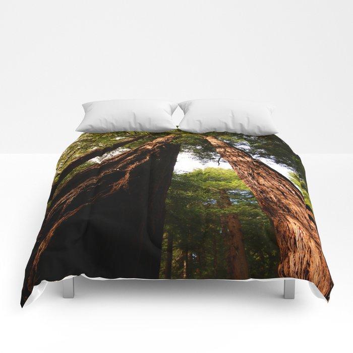 Redwood Tree Tops Comforters
