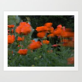 poppies in the breeze Art Print