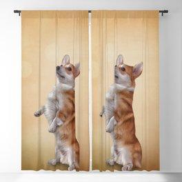 Dog breed Welsh Corgi Blackout Curtain