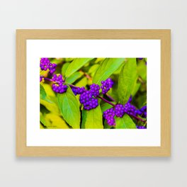 The Sweeter The Berry Framed Art Print