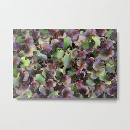 Red Leaf Lettuce Metal Print