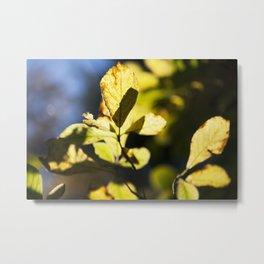 Fall leaves #03 Metal Print
