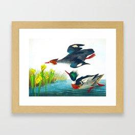 Red-breasted Merganser Bird Framed Art Print