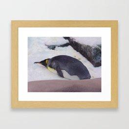 Penguin at Sea World 1 Framed Art Print