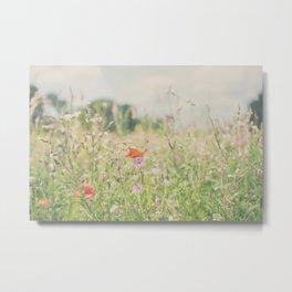wild flowers ... Metal Print