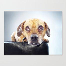 Super Pets Series 1 - Puppy Eyed Oaks Canvas Print