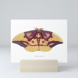 Imperial Moth (Eacles imperialis) Mini Art Print