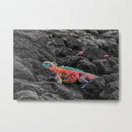 Christmas Iguana in the Galapagos Metal Print