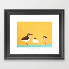 scolopacidae birds Framed Art Print