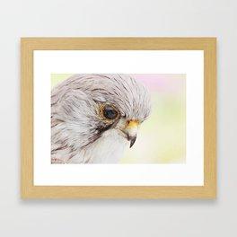 Falcon Head Close Up Framed Art Print
