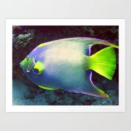 Queen Angelfish Art Print