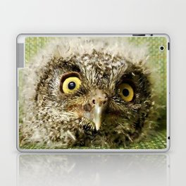 Western Screech Owl Baby Laptop & iPad Skin