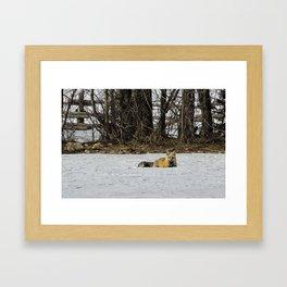 Beautiful Red Fox - No. 3 Framed Art Print
