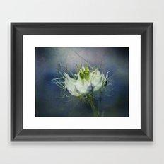 Nigella Framed Art Print