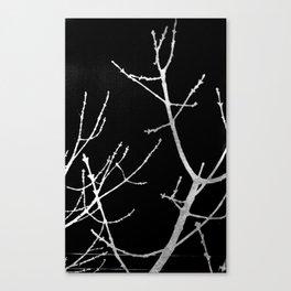 Graphic Twigs Canvas Print