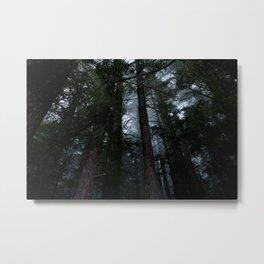Washington Woods Metal Print