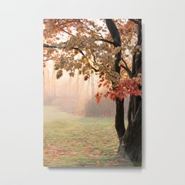 Japanese Maple at Sunrise in Fall Metal Print