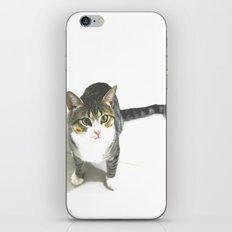 Miojo Cat. iPhone & iPod Skin