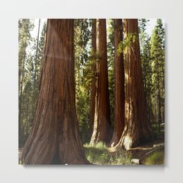 Yosemite Sequoia Forest Metal Print