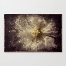 WhiteFlower Cosmos Canvas Print