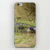 hippo iPhone & iPod Skins featuring hippo by Mathilde Nieuwenhuis