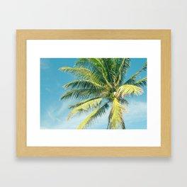 Hookipa Palm Dreams Framed Art Print