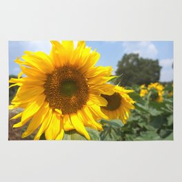 sunflower photography Rug