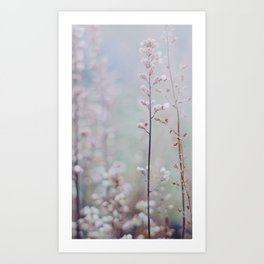 Flower Buds - III Art Print