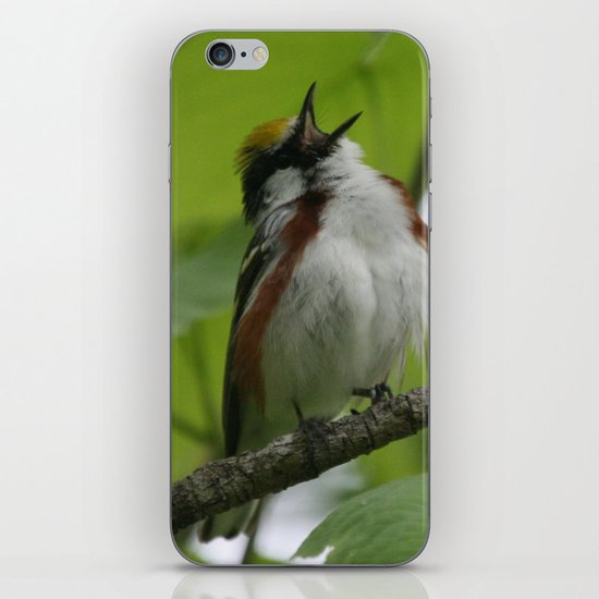 Chestnut-sided Warbler iPhone & iPod Skin