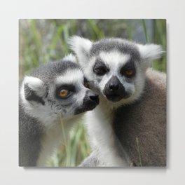 Lemur love Metal Print
