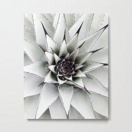 Plant, Succulent, Cactus, Nature, Scandinavian, Minimal, Wall art Metal Print