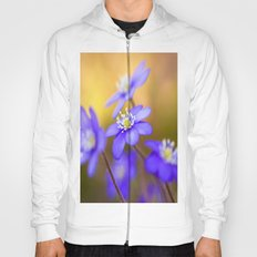Spring Wildflowers, Beautiful Hepatica in the forest on a sunny and colorful background Hoody