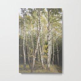 Autumn in Maine Metal Print