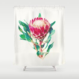 Vintage Protea  Shower Curtain
