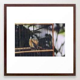 Bird, Bali Framed Art Print