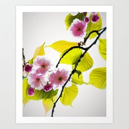 Cherry Blossom Tree Art Print