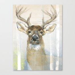 White-tailed Deer Surrounded By Birch Canvas Print