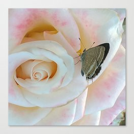 Butterfly on Pink Rose Canvas Print