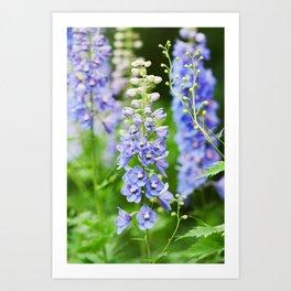Delphinium Flowers 1 Art Print