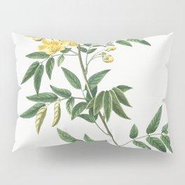 European larch Abies larix and Tamarack Abies microcarpafrom Traite des Arbres et Arbustes que lon c Pillow Sham