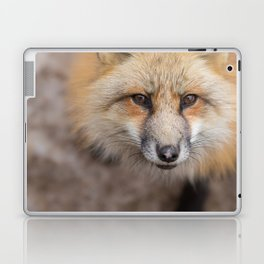 Fox! Laptop & iPad Skin