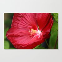 hibiscus Canvas Prints featuring Hibiscus  by LoRo  Art & Pictures