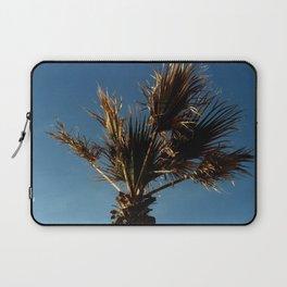 Palmetto in Lacanau-palms,drupe,sabal,swamp,cabbage,abanico,drupa,palmera Laptop Sleeve