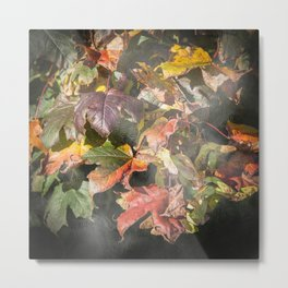 Autumn Sycamore Leaves Metal Print