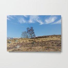 Moorland Trees Metal Print