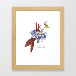 Blue Scabiosa Flower Framed Art Print
