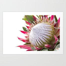 Fynbos Botanical Collection 3 Art Print