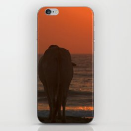 Cow Watching the Sunset Arambol iPhone Skin
